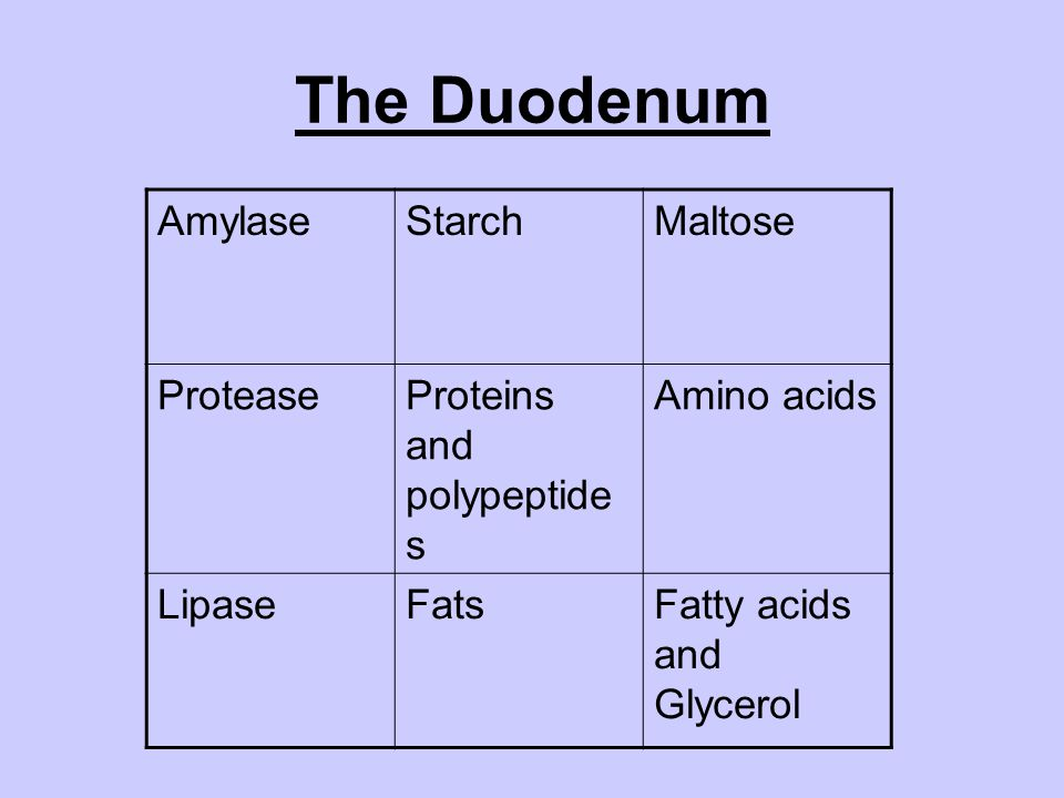 The Duodenum AmylaseStarchMaltose ProteaseProteins and polypeptide s Amino acids LipaseFatsFatty acids and Glycerol