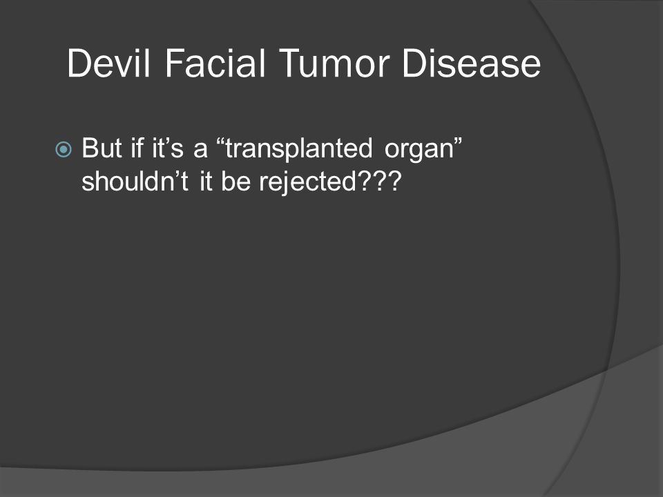 Devil Facial Tumor Disease  But if it's a transplanted organ shouldn't it be rejected