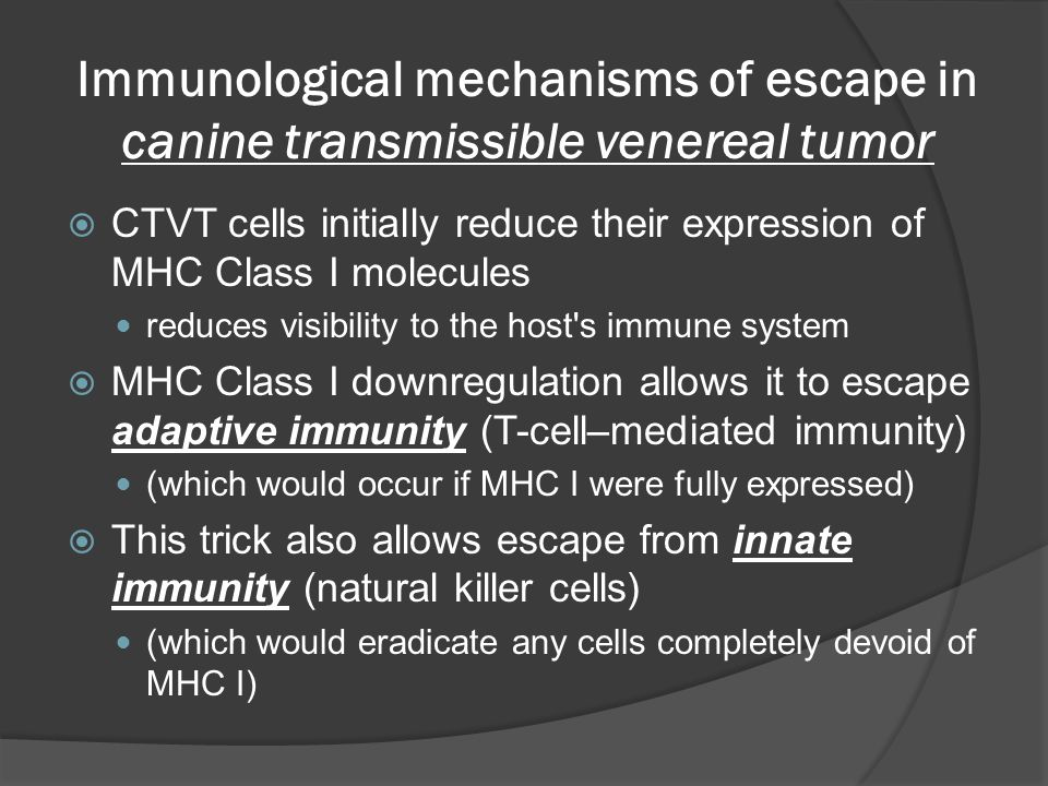 Immunological mechanisms of escape in canine transmissible venereal tumor  CTVT cells initially reduce their expression of MHC Class I molecules reduces visibility to the host s immune system  MHC Class I downregulation allows it to escape adaptive immunity (T-cell–mediated immunity) (which would occur if MHC I were fully expressed)  This trick also allows escape from innate immunity (natural killer cells) (which would eradicate any cells completely devoid of MHC I)
