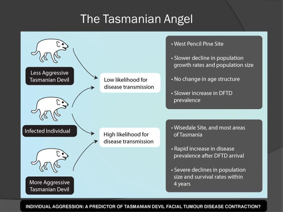 The Tasmanian Angel