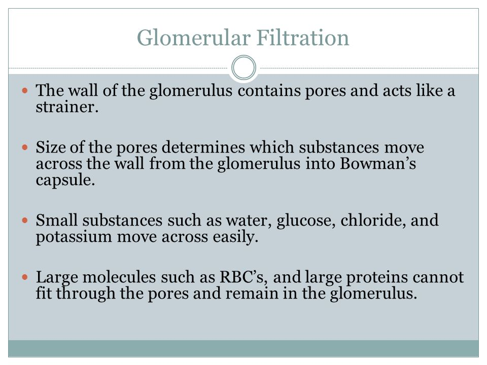 Glomerular Filtration The wall of the glomerulus contains pores and acts like a strainer.