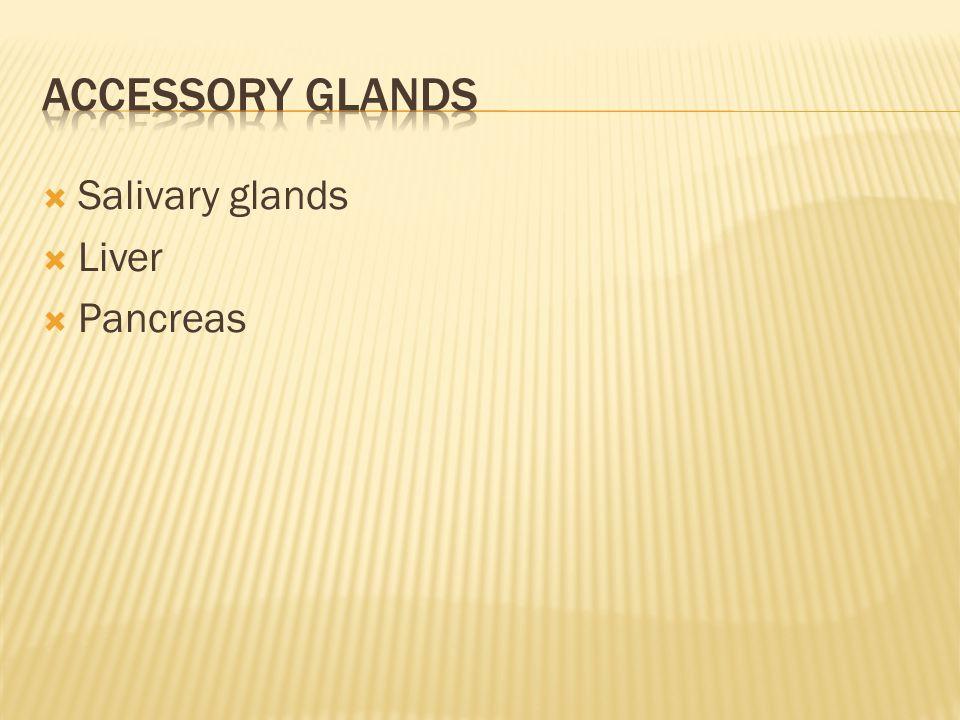  Salivary glands  Liver  Pancreas