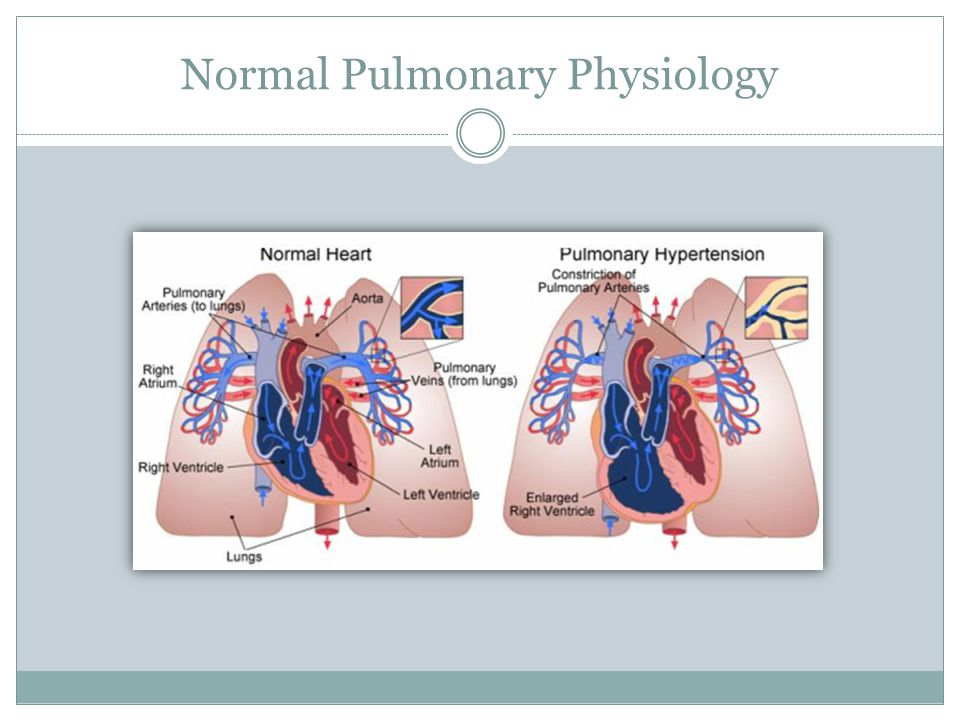 Normal Pulmonary Physiology
