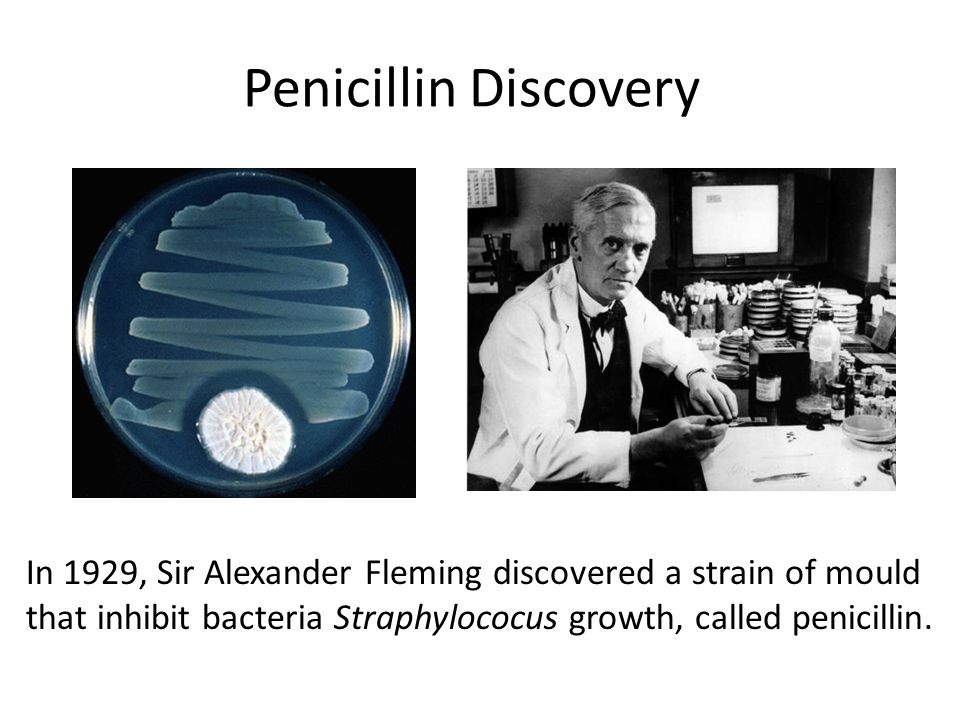 Penicillin Discovery In 1929, Sir Alexander Fleming discovered a strain of mould that inhibit bacteria Straphylococus growth, called penicillin.