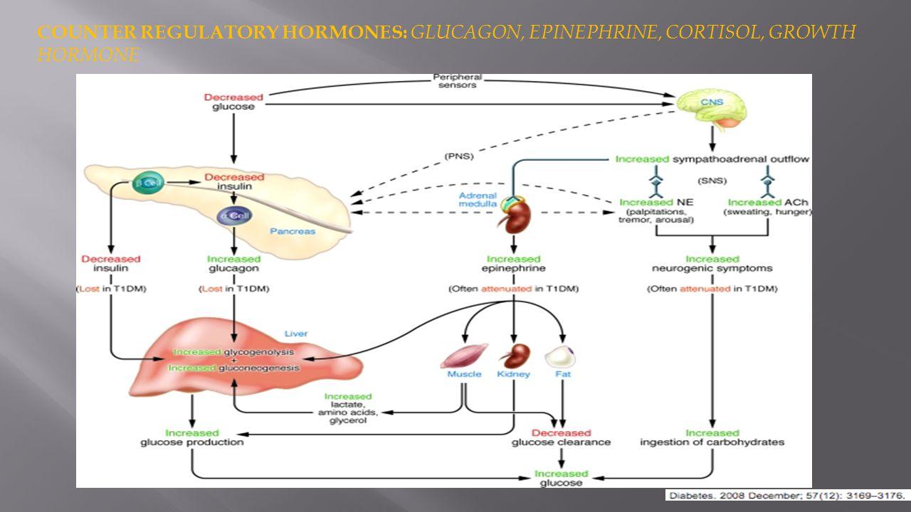 COUNTER REGULATORY HORMONES: GLUCAGON, EPINEPHRINE, CORTISOL, GROWTH HORMONE