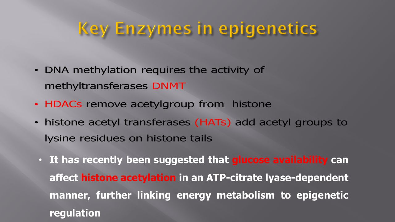 It has recently been suggested that glucose availability can affect histone acetylation in an ATP-citrate lyase-dependent manner, further linking ener