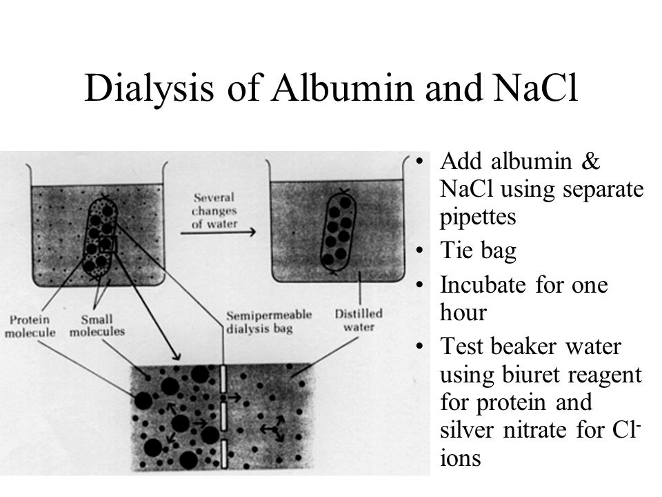 Dialysis of Albumin and NaCl Add albumin & NaCl using separate pipettes Tie bag Incubate for one hour Test beaker water using biuret reagent for prote