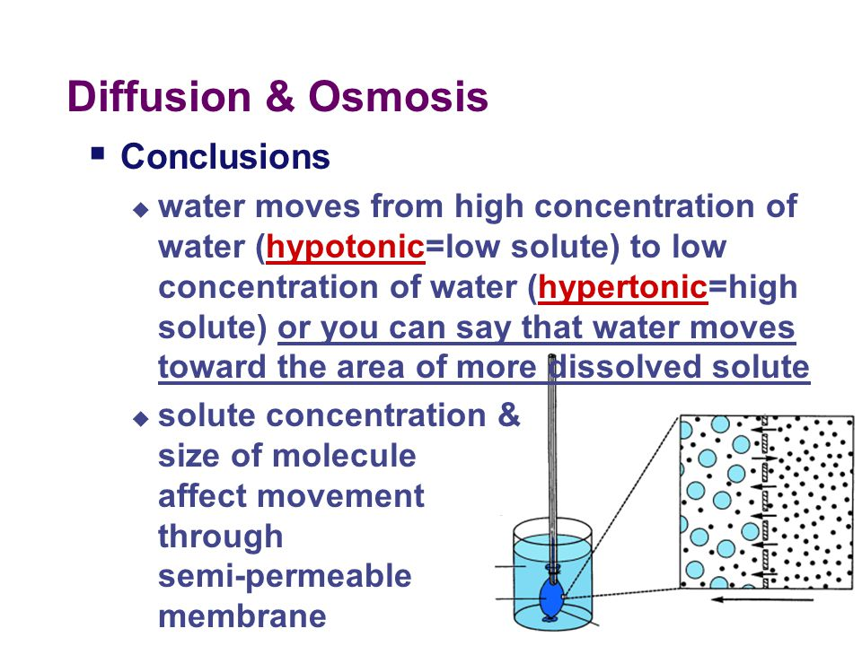 Diffusion & Osmosis  Concepts  semi-permeable membrane  diffusion  osmosis  solutions  hypotonic  hypertonic  isotonic  water potential =Osmo