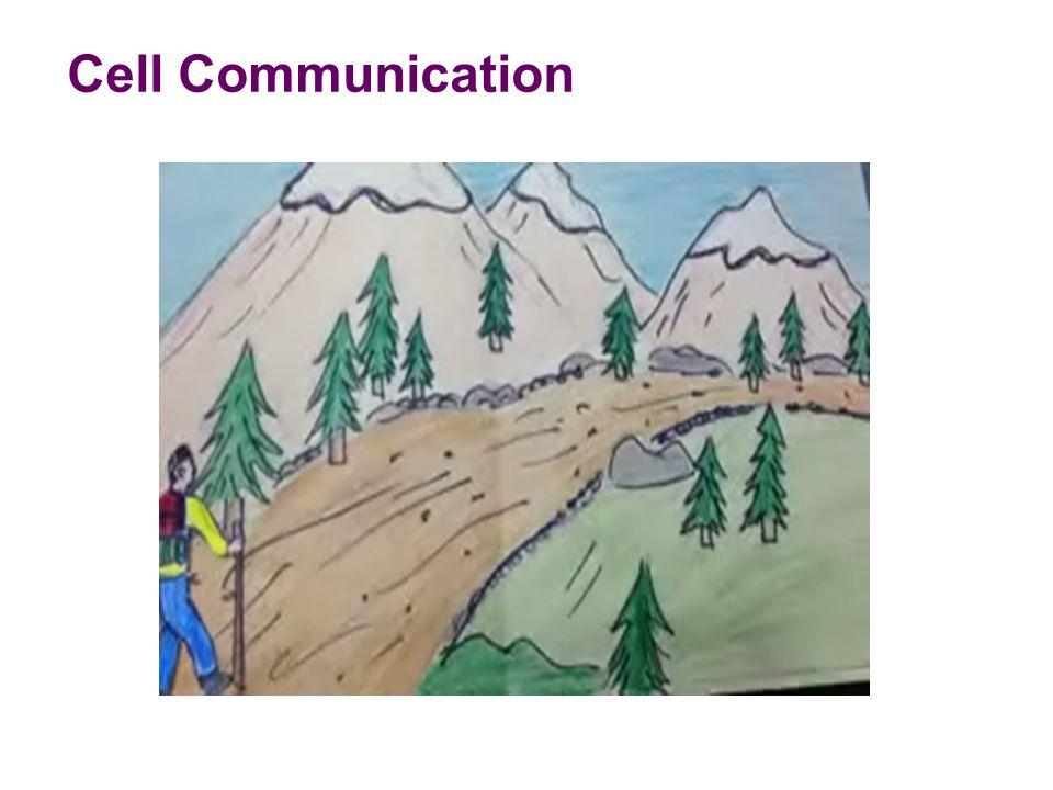  No Distance  Cell to cell contact (APC to Helper T)  Short Distance  Local regulator (Neurotransmitter between two neurons  Long Distance  Horm