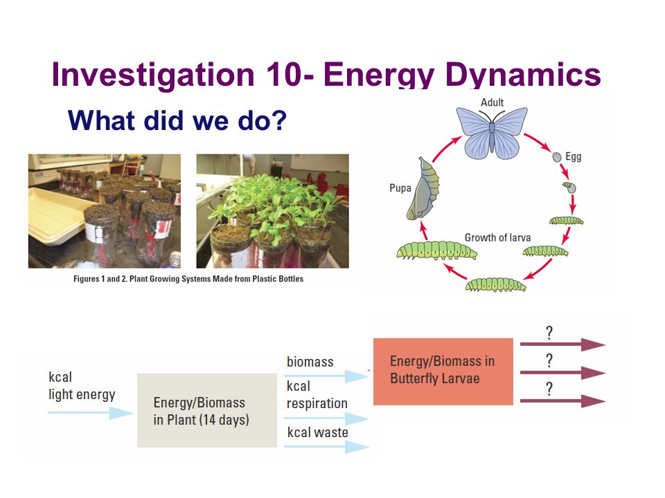 Investigation 10- Energy Dynamics What did we do?