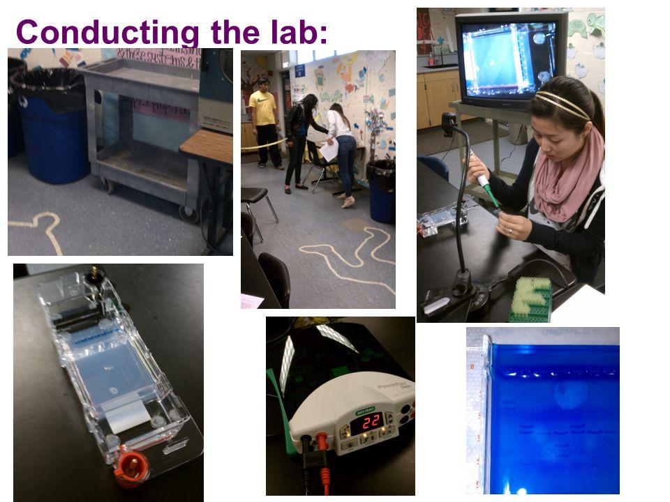 Lab 9: Gel Electrophoresis Quantifying RFLP size Known Marker