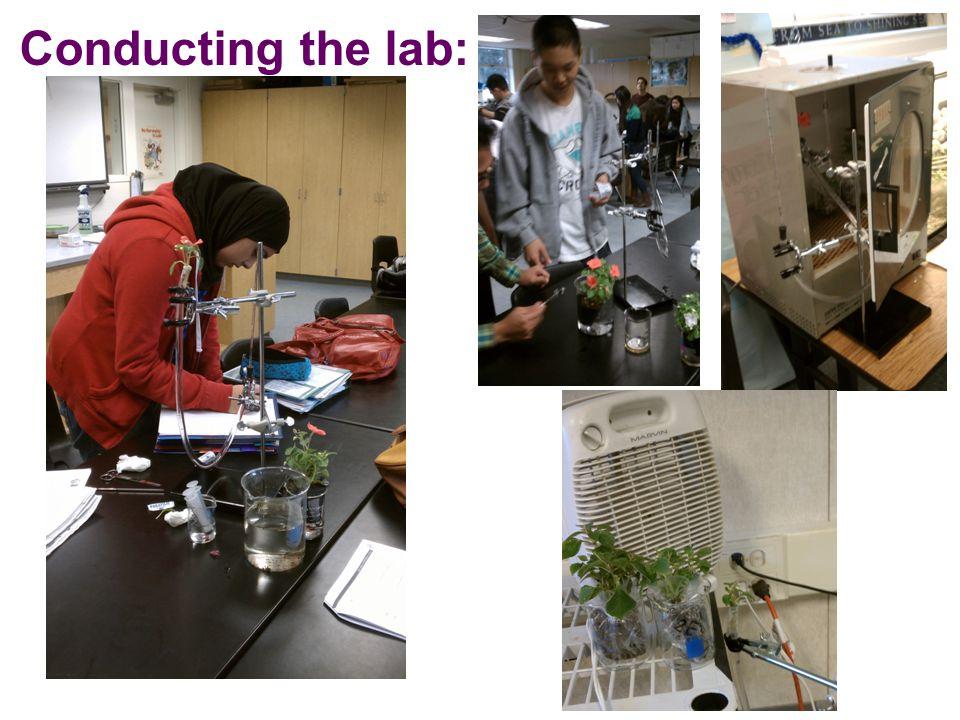 Lab 11: Transpiration  Conclusions   transpiration   wind   light   transpiration   humidity