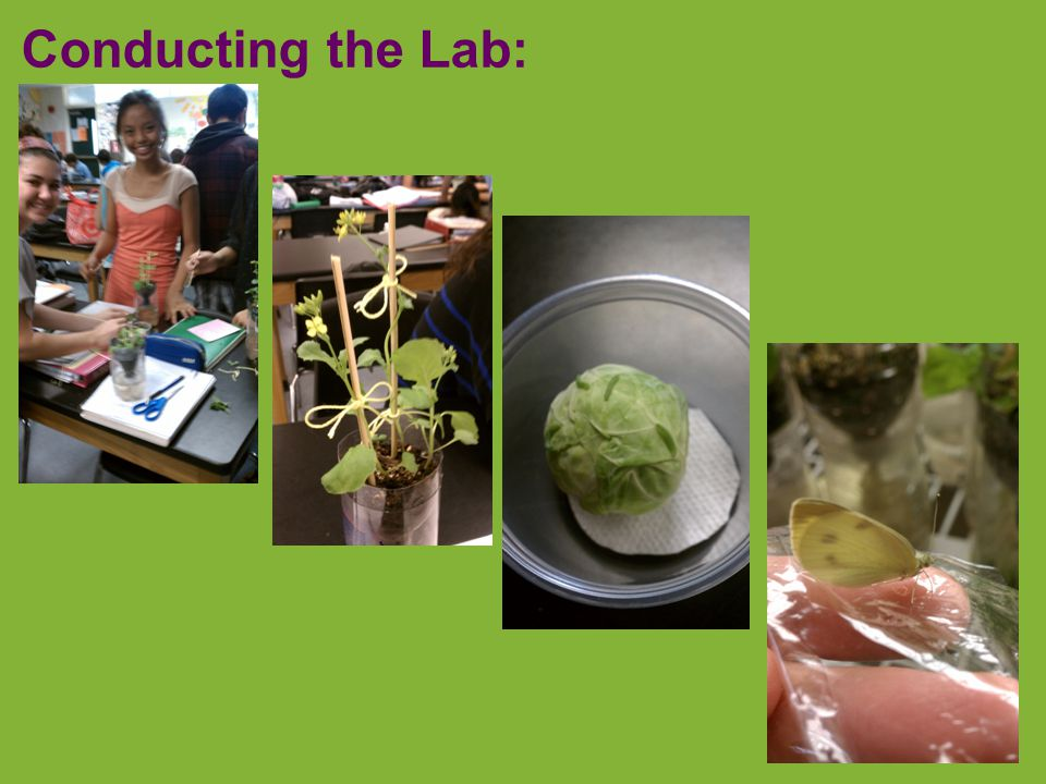 Lab 6: Cellular Respiration  Conclusions   temp =  respiration   germination =  respiration calculate rate?