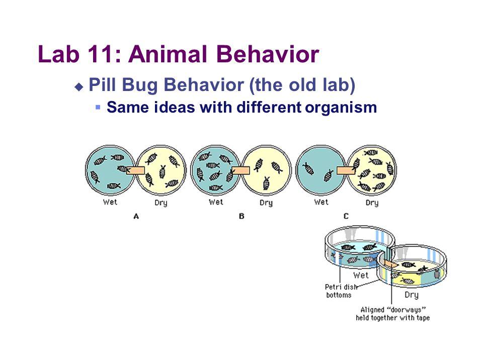Conducting the lab:
