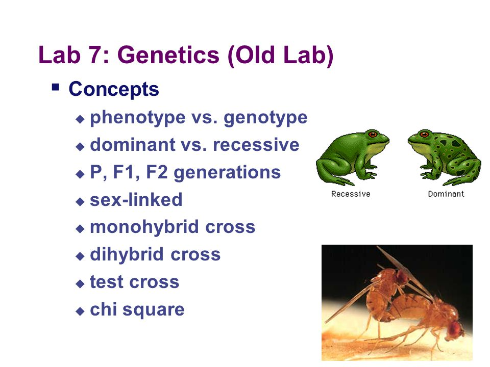 Lab 7: Genetics (Old Lab)  Description  given fly of unknown genotype use crosses to determine mode of inheritance of trait