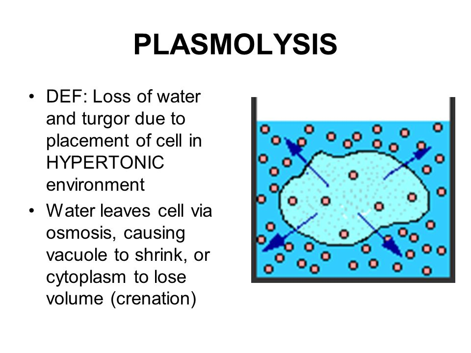 PLASMOLYSIS DEF: Loss of water and turgor due to placement of cell in HYPERTONIC environment Water leaves cell via osmosis, causing vacuole to shrink, or cytoplasm to lose volume (crenation)