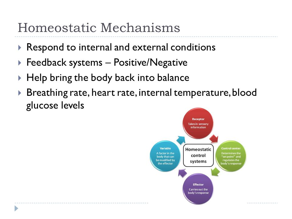 Homeostatic Mechanisms  Respond to internal and external conditions  Feedback systems – Positive/Negative  Help bring the body back into balance  Breathing rate, heart rate, internal temperature, blood glucose levels