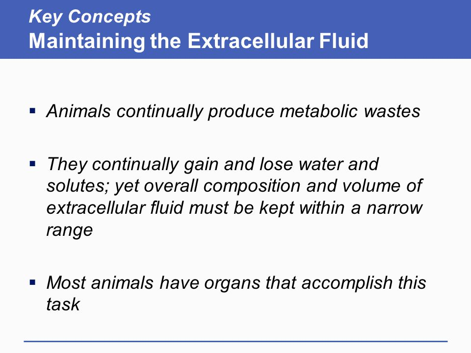 Key Concepts Maintaining the Extracellular Fluid  Animals continually produce metabolic wastes  They continually gain and lose water and solutes; yet overall composition and volume of extracellular fluid must be kept within a narrow range  Most animals have organs that accomplish this task
