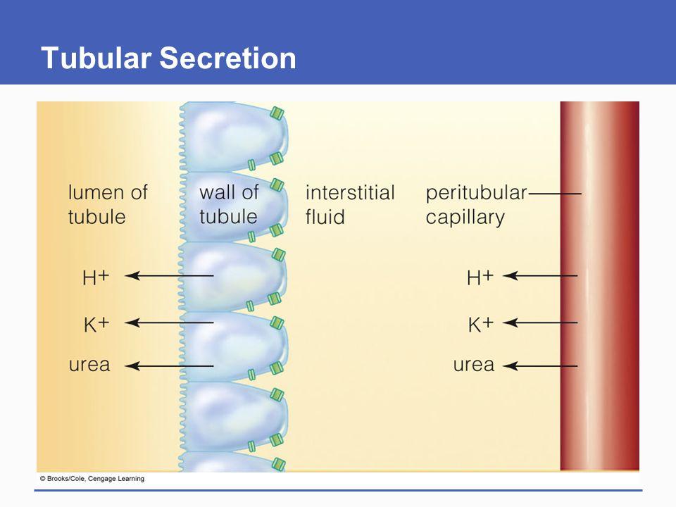 Tubular Secretion