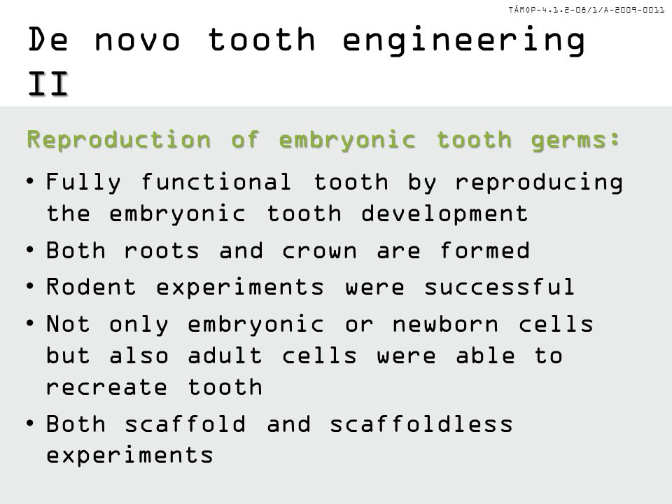TÁMOP-4.1.2-08/1/A-2009-0011 II De novo tooth engineering II Reproduction of embryonic tooth germs: Fully functional tooth by reproducing the embryonic tooth development Both roots and crown are formed Rodent experiments were successful Not only embryonic or newborn cells but also adult cells were able to recreate tooth Both scaffold and scaffoldless experiments
