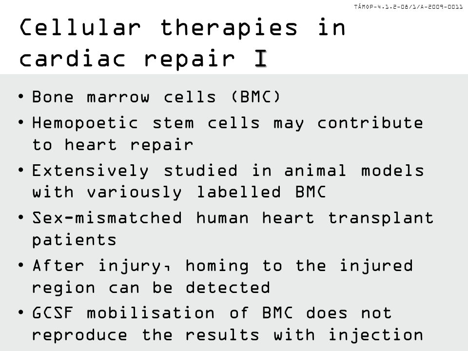 TÁMOP-4.1.2-08/1/A-2009-0011 I Cellular therapies in cardiac repair I Bone marrow cells (BMC) Hemopoetic stem cells may contribute to heart repair Extensively studied in animal models with variously labelled BMC Sex-mismatched human heart transplant patients After injury, homing to the injured region can be detected GCSF mobilisation of BMC does not reproduce the results with injection