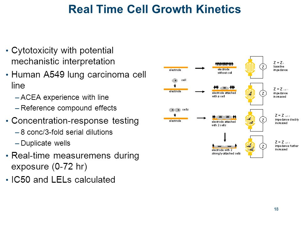 18 Real Time Cell Growth Kinetics Cytotoxicity with potential mechanistic interpretation Human A549 lung carcinoma cell line –ACEA experience with line –Reference compound effects Concentration-response testing –8 conc/3-fold serial dilutions –Duplicate wells Real-time measuremens during exposure (0-72 hr) IC50 and LELs calculated
