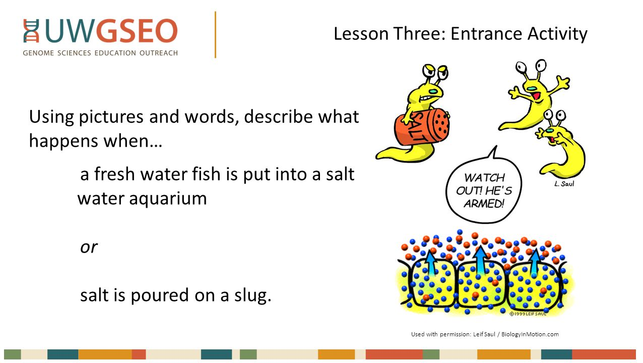 Lesson Three: Entrance Activity Using pictures and words, describe what happens when… a fresh water fish is put into a salt water aquarium or salt is poured on a slug.