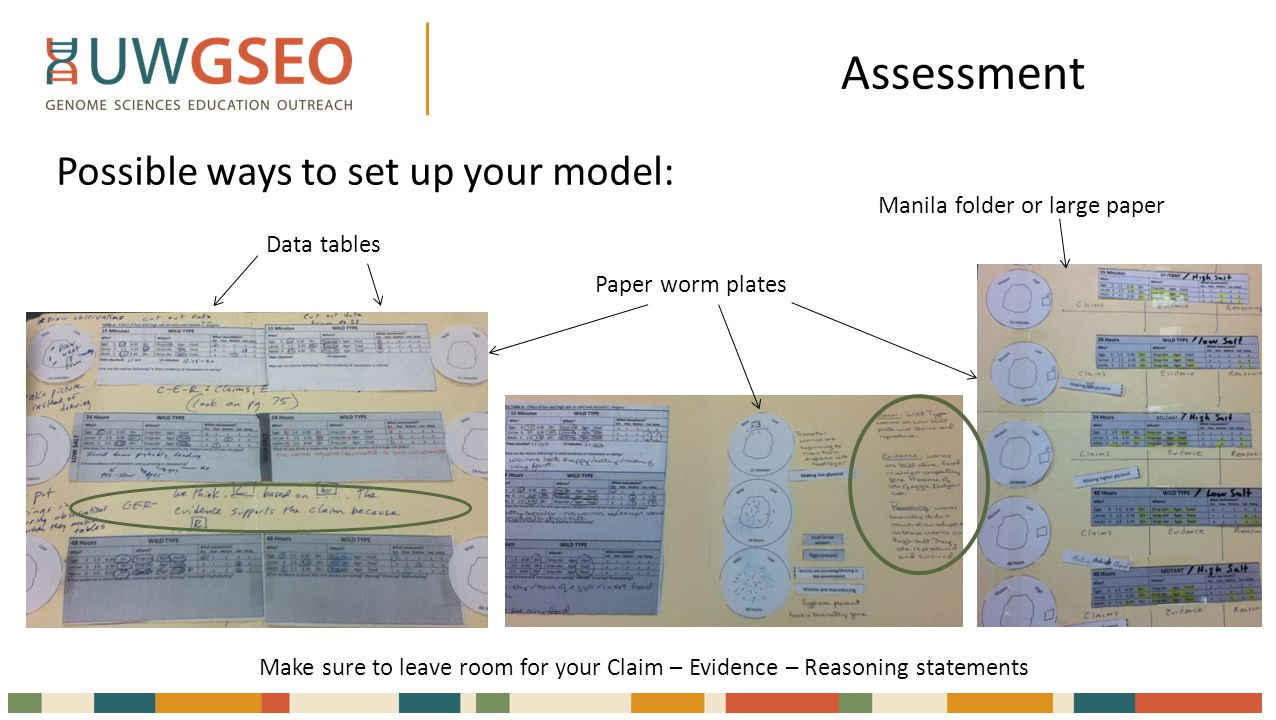 Assessment Possible ways to set up your model: Data tables Paper worm plates Manila folder or large paper Make sure to leave room for your Claim – Evidence – Reasoning statements