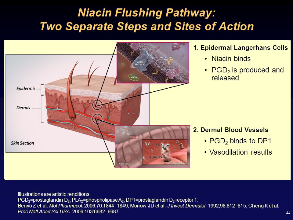 44 Niacin Flushing Pathway: Two Separate Steps and Sites of Action Illustrations are artistic renditions. PGD 2 =prostaglandin D 2 ; PLA 2 =phospholip
