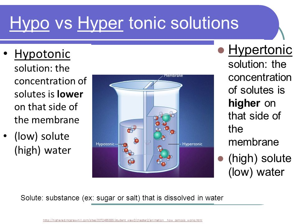 Hypo vs Hyper tonic solutions http://highered.mcgraw-hill.com/sites/0072495855/student_view0/chapter2/animation__how_osmosis_works.html Hypertonic solution: the concentration of solutes is higher on that side of the membrane (high) solute (low) water Hypotonic solution: the concentration of solutes is lower on that side of the membrane (low) solute (high) water Solute: substance (ex: sugar or salt) that is dissolved in water