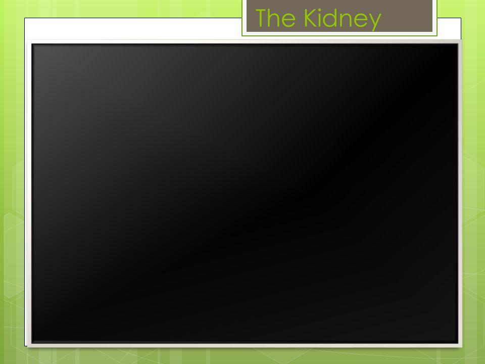 Natural kidney's vs.