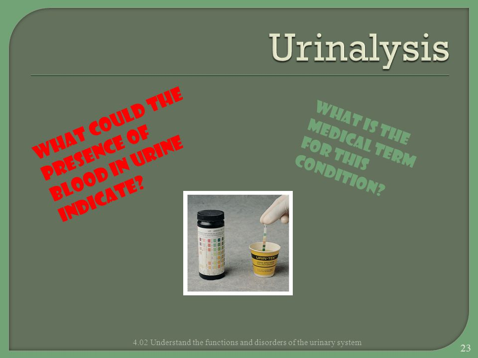 4.02 Understand the functions and disorders of the urinary system What could the presence of blood in urine indicate? What is the medical term for thi