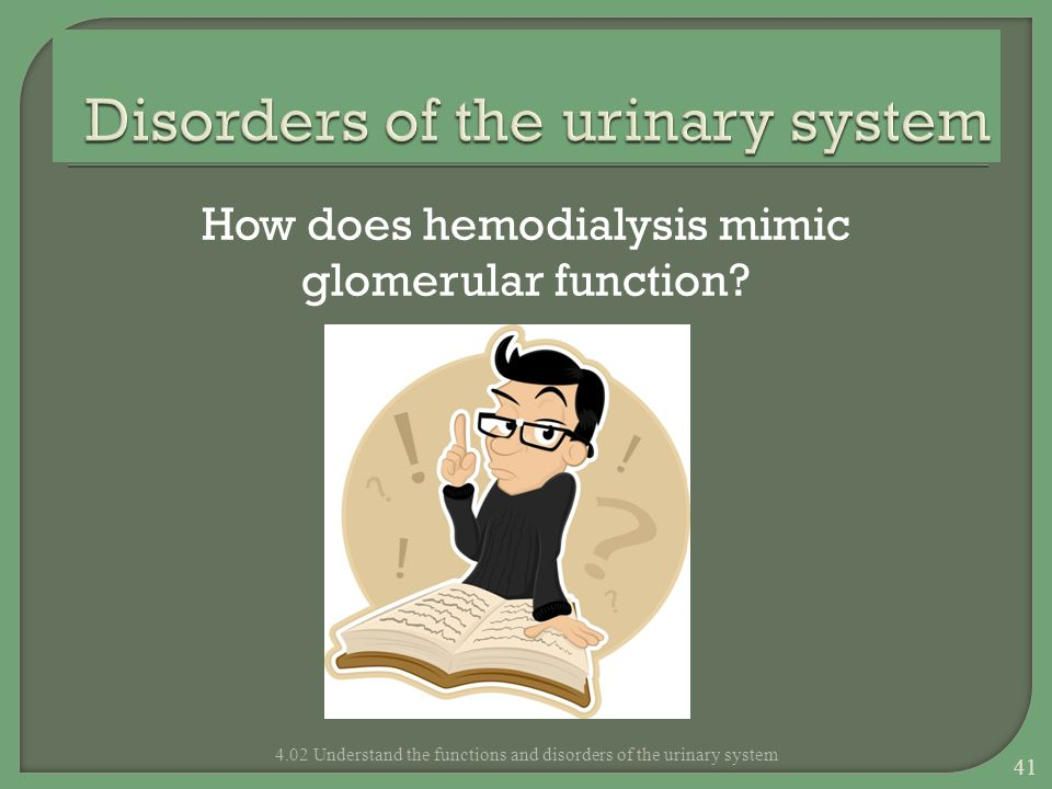 How does hemodialysis mimic glomerular function? 4.02 Understand the functions and disorders of the urinary system 41