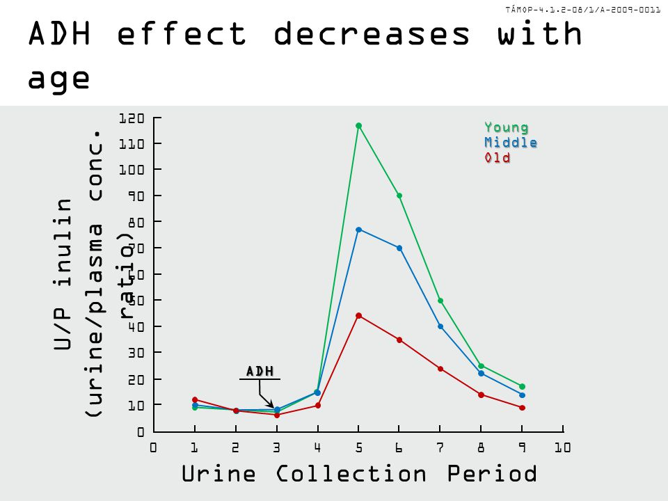 TÁMOP-4.1.2-08/1/A-2009-0011 ADH effect decreases with age U/P inulin (urine/plasma conc. ratio) Urine Collection Period 0 0 10 20 30 40 50 60 70 80 9