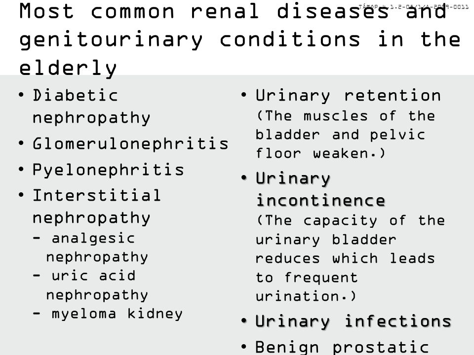 TÁMOP-4.1.2-08/1/A-2009-0011 Most common renal diseases and genitourinary conditions in the elderly Diabetic nephropathy Glomerulonephritis Pyelonephr