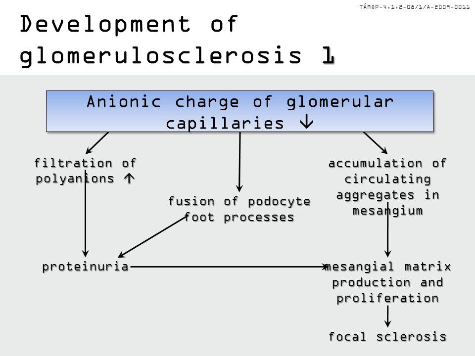 TÁMOP-4.1.2-08/1/A-2009-0011 Glomerular sclerosis