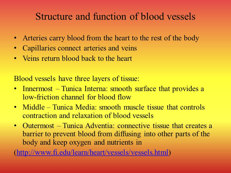 Structure and function of blood vessels Arteries carry blood from the heart to the rest of the body Capillaries connect arteries and veins Veins return blood back to the heart Blood vessels have three layers of tissue: Innermost – Tunica Interna: smooth surface that provides a low-friction channel for blood flow Middle – Tunica Media: smooth muscle tissue that controls contraction and relaxation of blood vessels Outermost – Tunica Adventia: connective tissue that creates a barrier to prevent blood from diffusing into other parts of the body and keep oxygen and nutrients in (http://www.fi.edu/learn/heart/vessels/vessels.html)http://www.fi.edu/learn/heart/vessels/vessels.html