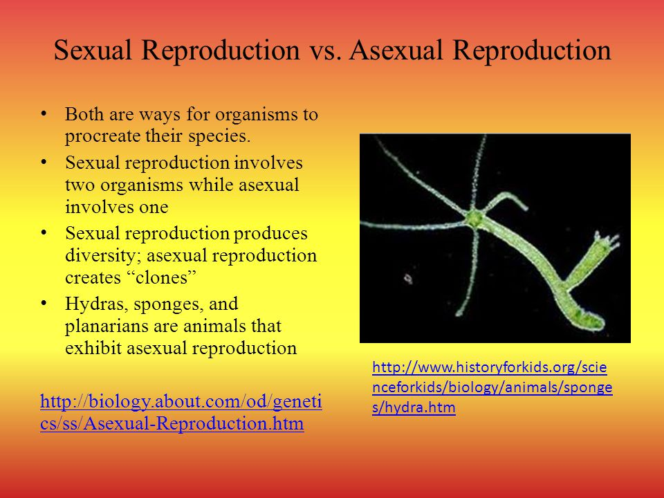 Sexual Reproduction vs. Asexual Reproduction Both are ways for organisms to procreate their species. Sexual reproduction involves two organisms while