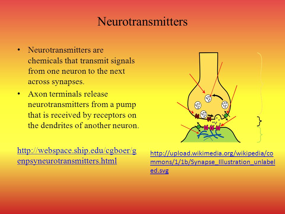 Neurotransmitters Neurotransmitters are chemicals that transmit signals from one neuron to the next across synapses. Axon terminals release neurotrans
