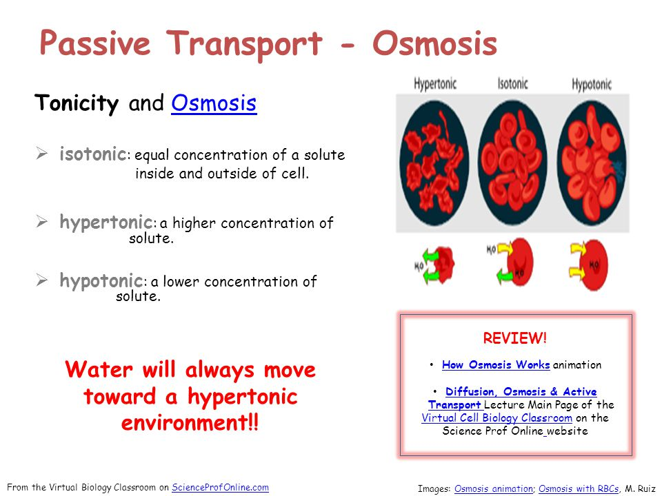 Tonicity and OsmosisOsmosis  isotonic : equal concentration of a solute inside and outside of cell.  hypertonic : a higher concentration of solute.