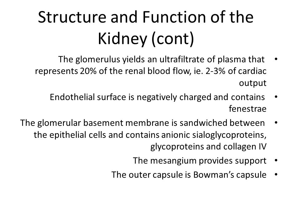 Structure and Function of the Kidney (cont) The glomerulus yields an ultrafiltrate of plasma that represents 20% of the renal blood flow, ie. 2-3% of