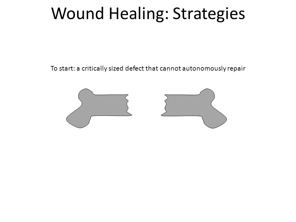 Wound Healing: Strategies A) Inject cells (from patient or donor), cells will make new bone 1.If cells are not from patient, big problems with immune rejection a.Xenograft: different species.