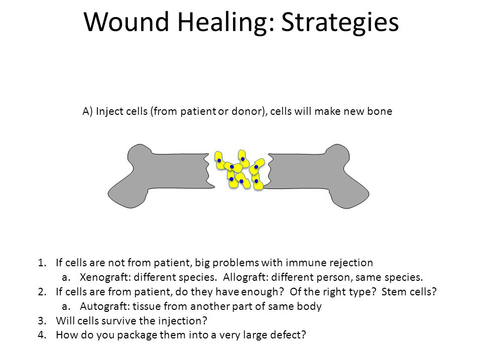 B) Add scaffold, entice cells to migrate in and repair Wound Healing: Strategies 1.Scaffold needs to be permissive to cells and nutrients, but not entice immune response a)Properties to entice cell of interest, block out others 2.Scaffold must be mechanically appropriate 3.Is patient in traction during healing.