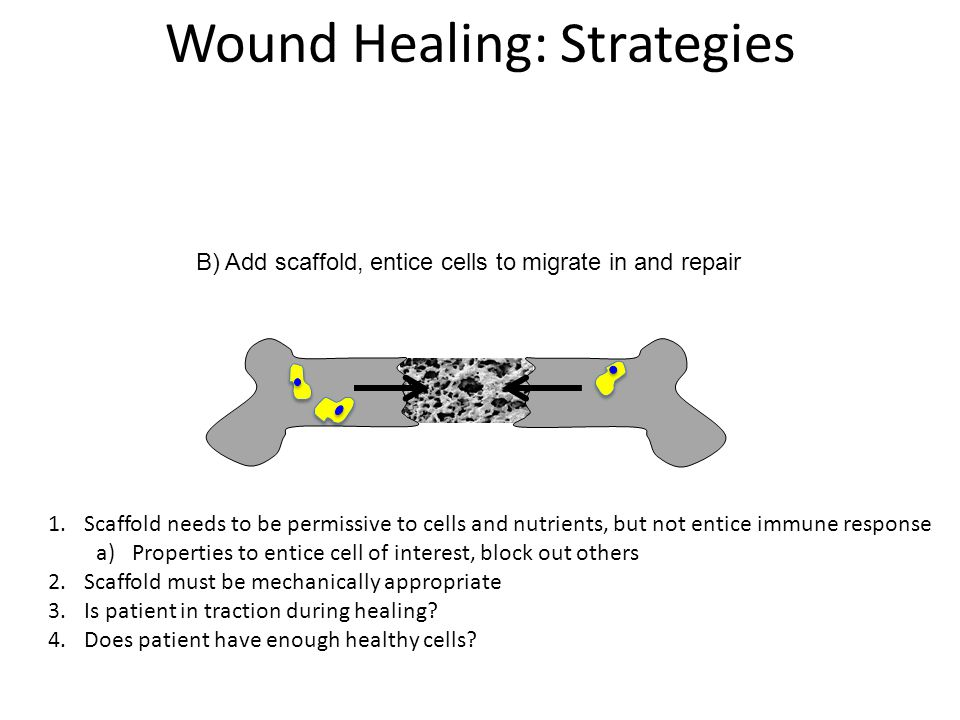C) Add cells and scaffold, scaffold replaced over time Wound Healing: Strategies 1.All the issues of cell-only and scaffold only implantation w.r.t.