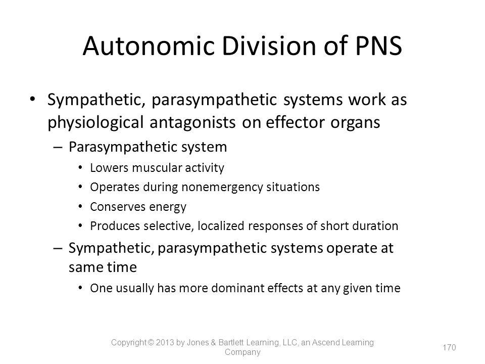 Autonomic Division of PNS Sympathetic, parasympathetic systems work as physiological antagonists on effector organs – Parasympathetic system Lowers mu