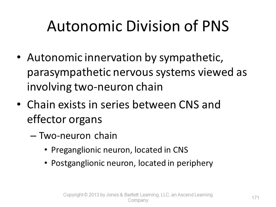 Autonomic Division of PNS Autonomic innervation by sympathetic, parasympathetic nervous systems viewed as involving two-neuron chain Chain exists in s