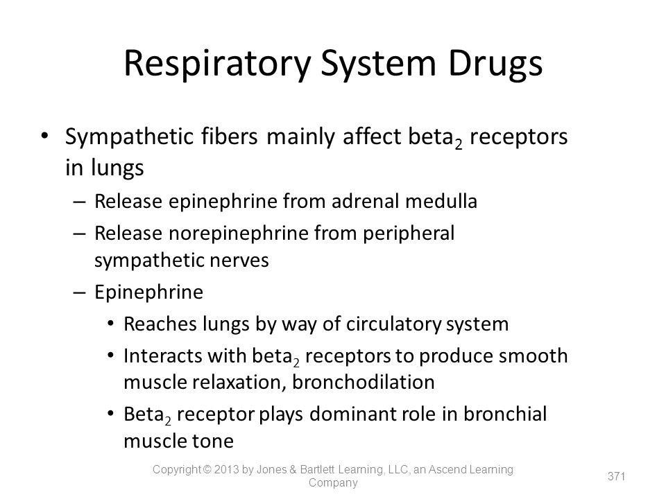 Respiratory System Drugs Sympathetic fibers mainly affect beta 2 receptors in lungs – Release epinephrine from adrenal medulla – Release norepinephrin