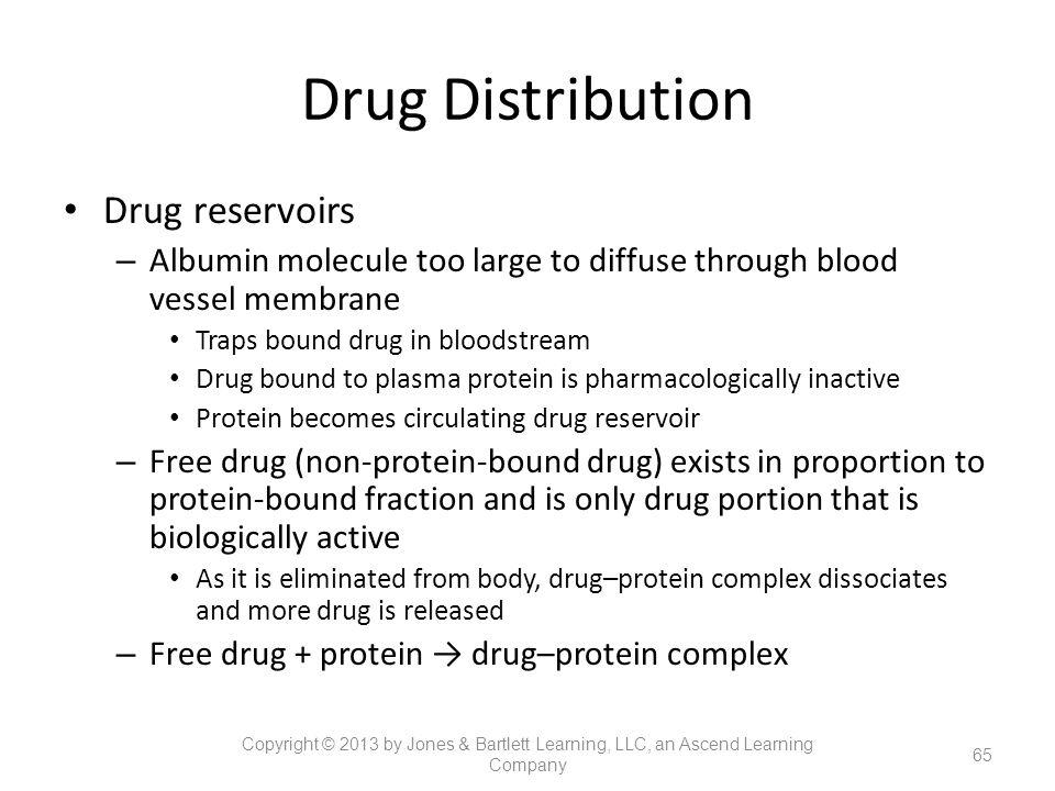 Drug Distribution Drug reservoirs – Albumin molecule too large to diffuse through blood vessel membrane Traps bound drug in bloodstream Drug bound to