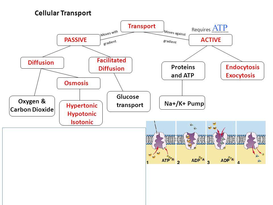 Cellular Transport Requires ______