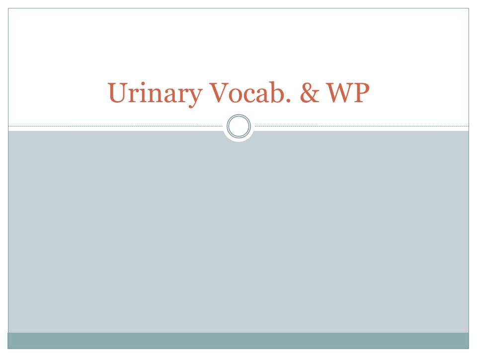 Urinary Vocab. & WP